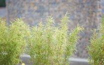 Gartendetail: Sichtschutz aus Gabionenmauer